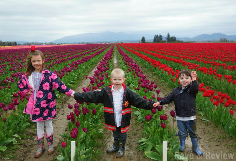 Cousins in tulips